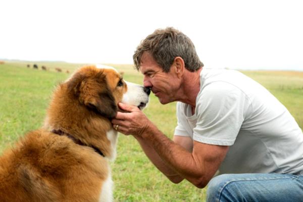 10-animal-starring-in-movie (1)