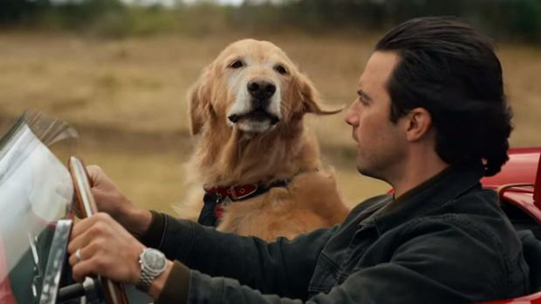 10-animal-starring-in-movie (9)